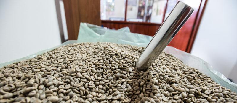 Green Coffee.jpg