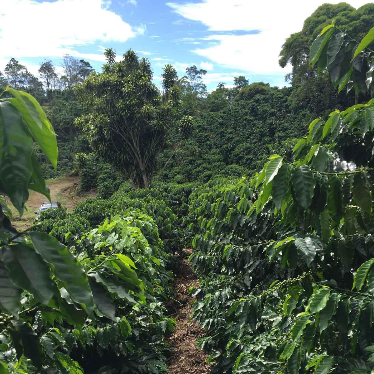 Costa Rican Farm